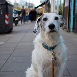 Dog waiting for owner by Czifra Dániel - Animals - Dogs Portraits ( brighton, uk, pet, waiting, travel, cute, dog )