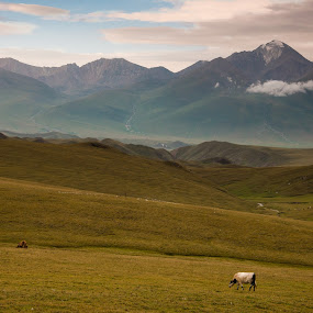 Sunset @ Muztagh Atah @ Xinjiang by Vorravut Thanareukchai - Landscapes Mountains & Hills ( curve, mountain, grass, snow mountains, cow, line, landscape, ox, xinjiang, muztagh, sunset, snow, cloud, china )