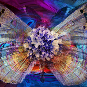 ONE DAY FLY by Carmen Velcic - Digital Art Abstract ( abstract, butterfly, purple, blue, color, flowers, digital )