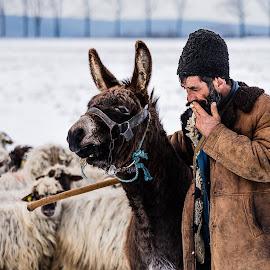 Romanian shepherd with his donkey and his flock near Comana, Romania by Marius Cinteza - People Portraits of Men