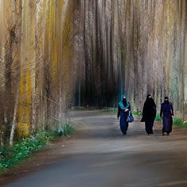 Walk together  by Amrita Bhattacharyya - Landscapes Travel