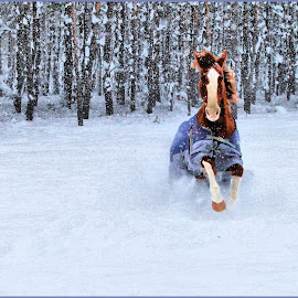 Sassy in the Snow by Anita Atta - Animals Horses ( love, field, galloping, tennesse walker, snow, horse )