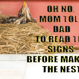 Think Before You Nest by Sheen Deis - Typography Captioned Photos ( signs, baby robins, robins, humor )