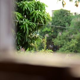 by Devaleena Sinha - Novices Only Flowers & Plants