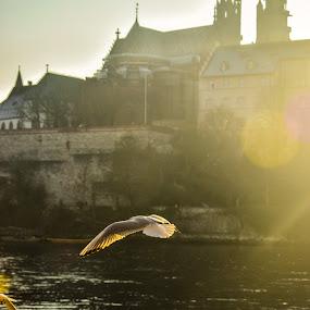 Basel, Switzerland  by Crinu Topalo - Animals Birds