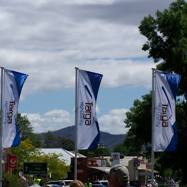 Targa High Country Rally by Sarah Harding - Novices Only Sports ( flags, racing, cars, outdoors, novices only, sport )