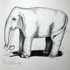 Elephant by Natasha Rupert - Drawing All Drawing ( pencil, sketch, elephant, drawing, animal )