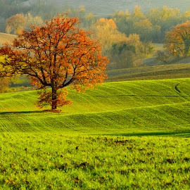The tree by Mauro Fini - Landscapes Prairies, Meadows & Fields ( tree )