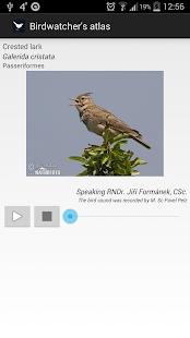 Birds of Europe FULL for pc