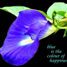 blue by SANGEETA MENA  - Typography Quotes & Sentences