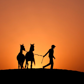 I miss you by Walid Ahmad - Animals Horses ( silhouette wildlife horses dubai man nikon canon photography )