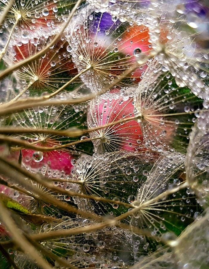 by Nikoleta Zlateva - Flowers Flowers in the Wild (  )