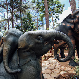 Elephants by Sherisse Condenuevo - Novices Only Objects & Still Life ( elephants park, elephants and trees, elephants, still life, statue, elephant park, elephant, trees, elephant statue, park )