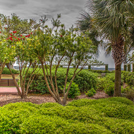 Green by Keith Wood - City,  Street & Park  City Parks ( kewphoto, hdr, green, beaufort sc, keith wood,  )