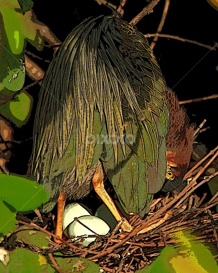 Green Heron on Eggs by Herb Houghton - Digital Art Things ( wading bird, green heron, nest, egret, greenie )