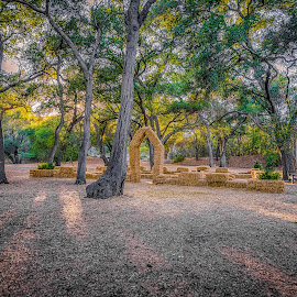 Oak Forest at Descanso Gardens by Max Juan - Landscapes Forests ( descanso garden, maxretouch, gardens, forest, la canada )