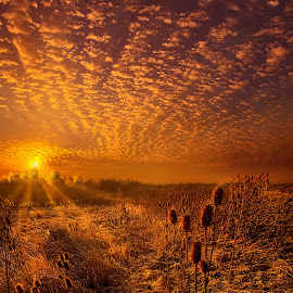 What Will Be Will Be by Phil Koch - Landscapes Prairies, Meadows & Fields ( vertical, travel, yellow, love, sky, nature, weather, light, orange, trending, thistle, colors, twilight, art, mood, journey, horizon, rural, portrait, country, dawn, environment, season, serene, popular, outdoors, lines, natural, hope, inspirational, canon, wisconsin, ray, joy, landscape, sun, photography, life, emotions, dramatic, horizons, inspired, clouds, office, park, heaven, camera, beautiful, scenic, living, morning, field, unity, blue, sunset, amber, peace, meadow, beam, sunrise, earth, geese )