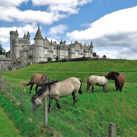 by Phil Bear - Animals Horses ( castle, uk, balmoral castle, horses, scotland )
