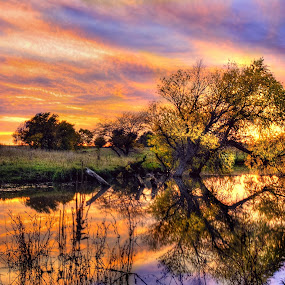 Farm Pond by DE Grabenstein - Landscapes Sunsets & Sunrises ( sunset, reflections, farm pond, willow, rural,  )