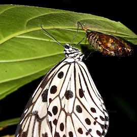 #Butterfly with its shell by Sanket Dhande - Novices Only Wildlife