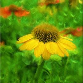 Coneflower Field by Millieanne T - Digital Art Things ( digital effects, raindrops, coneflowers )