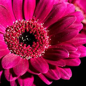 Flower Macro by Mike Allen - Flowers Single Flower ( spring, macro, closeup, flower,  )