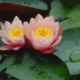 Water Lily's by Nancy Bowen - Digital Art Things ( water, peach colored, lily's )