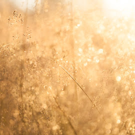 Last light by Kristine Fjellvang - Nature Up Close Leaves & Grasses