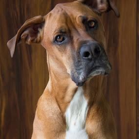 (11) 2016-01-24 by Richelle Wyatt - Animals - Dogs Portraits