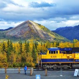 Alaska Railroad by Rob Hallifax - Transportation Trains ( #train, #denali, #alaska, #transportation, #trains,  )