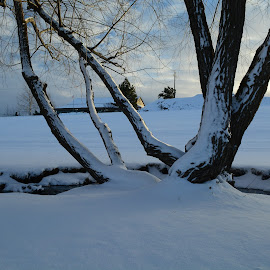 After the storm. by Denton Thaves - Landscapes Weather ( winter, snow, winter storm )
