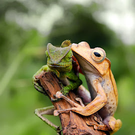 Sshh, listen by Rizki Irfansyah - Animals Amphibians ( eared tree frog, forest dragon )