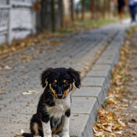 ... singur - ... alone by Constantinescu Adrian Radu - Animals - Dogs Puppies ( urban, street, puppie, dog, alone, animal )
