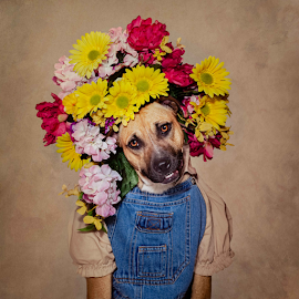 ProVie by Tammy Swarek - Animals - Dogs Portraits ( rescuedog, shelterpets, adoption, fashion, floralcrown, headpiece, cute, overalls, portrait, photography, eldorado, tammyswarek, opttoadopt, shelter, shelterpetsproject, pets, denim, ucaps, dog, flowers, floral, tammy swarek, arkansas )
