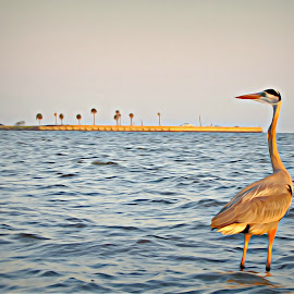 A Long Walk to the Lighthouse by Irina Aspinall - Digital Art Animals ( bird, biloxi lighthouse, pensive, ocean )