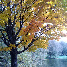 Autumn Scene by Barbara Storey - Landscapes Forests ( nature, tree, autumn, foliage, fall, yellow, leaves, river )