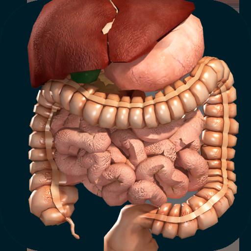 Internal Organs in 3D (Anatomy)