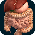 Internal Organs in 3D (Anatomy) APK for Nexus