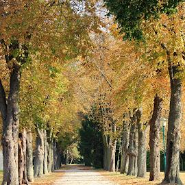 by Pavel Vlček - City,  Street & Park  City Parks