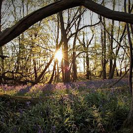 by Wilf Hockney - Landscapes Forests