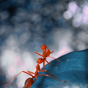 Dancing by Irfan Hikmawan - Animals Insects & Spiders