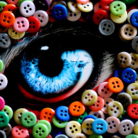 Button eyes by Vivek Anandhan - Abstract Macro ( abstract, blue, colors, art, eyes )
