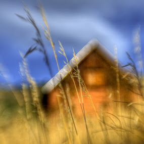 Time Moves On by AJ Schroetlin - Nature Up Close Leaves & Grasses ( building, color, grass, blur, lensbaby, aj schroetlin )