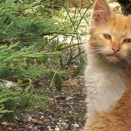 Коте by Georgi Kolev - Animals - Cats Portraits ( храсти., коте., ден., светлина., цветове. )