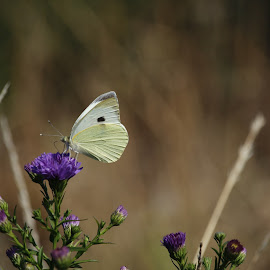 BUTTERFLY AND FLOWER by Aida Neves - Animals Other