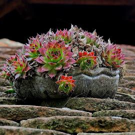 by Jasmina Blagojević - Nature Up Close Other plants