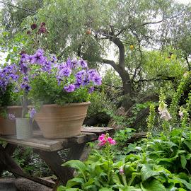 Mälarpaviljongen by Viive Selg - Flowers Flower Gardens