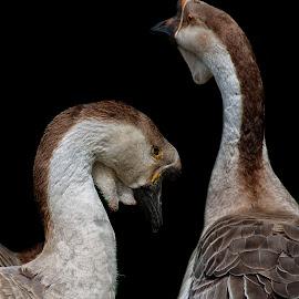 by Vladimir Jablanov - Animals Birds