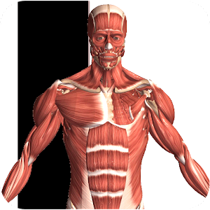Visual Anatomy 2 Online PC (Windows / MAC)