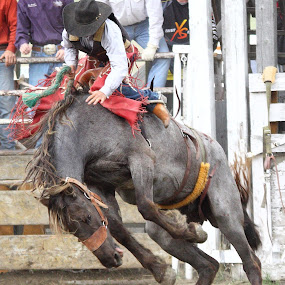 No Touching! by Brian Robinson - Sports & Fitness Rodeo/Bull Riding